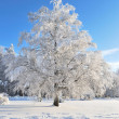 Stock Photo: Beautiful tree in rime