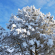 Beautiful snow-covered tree - Stock Photo