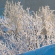 Hoarfrost on the bushes — Stock Photo