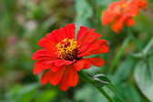 Red flower 2 — Stock Photo