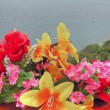 Stock Photo: Flowers on Sea, Croatia, May 2003