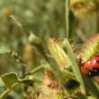 Ladybugs outside Yellowstone, 2005 — Stock Photo