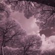 Infrared Trees, Torre Mozza, Italy, Sept - Foto de Stock  