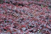 Blätter teppich, miami, florida, januar 2 — Stockfoto