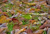 落叶在托斯卡纳花园,2008 年 — 图库照片
