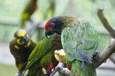 Birds in Kuala Lumpur Bird Park, 2009 — Stock Photo