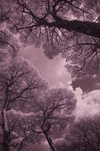 Infrared Trees, Torre Mozza, Italy, Sept — Stock Photo