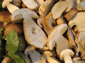 Sliced Boletus, Italy — Stock Photo