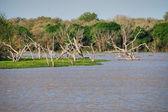 Lake near Galveston, Texas — Stock Photo