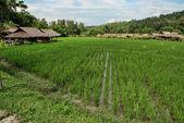 Changmai, Thailand — Photo