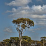 Countryside of Queensland, Australia — Stock Photo #2170535