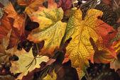 Fallen Leaves, Toronto , Canada — Foto Stock