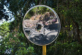 Detail of Daintree National Park — Stock Photo