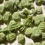 Wild leek & spinach gnocchi — Stock Photo