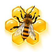 Bee and honeycombs vector — Stock Photo