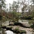Tranquil Pond — Stock Photo #1332156