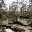 Stock Photo: Tranquil Pond