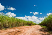 Road for the Sugar Cane Field — Stock Photo