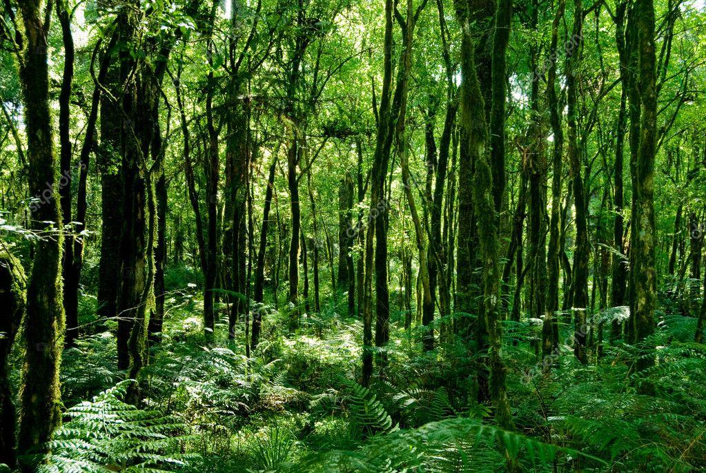 手绘法式雨林壁纸