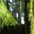 Trunk with moss — Foto Stock