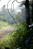 Web. — Stockfoto