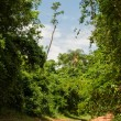 Stock Photo: Road on Forest