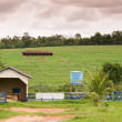 Brazilian Farm — Stock Photo