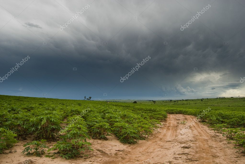 Rain clouds above manioc plantation on southern Brazil. — Stock Photo #1719409