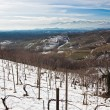 Snowed vineyards - Stock Photo