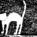Plaster cat — Stock Vector