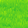 Fresh grass texture - Stock Vector