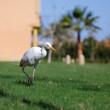 Stock Photo: White heron