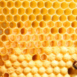 Foto Stock: Bees on honeycomb