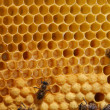 Stock Photo: Bees on honeycomb