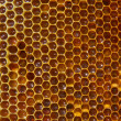 Bees on honeycomb — Stock Photo #1281362
