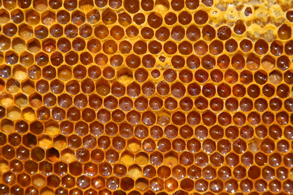 A closeup view of worker bees feverishly working to fill waxed honeycomb with honey. — Stock Photo #1281341
