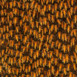 Bee Hive - Stock Photo