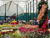 Flower Show, Lalbagh Bangaluru — Stock Photo