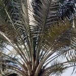 Palm leafs — Stock Photo