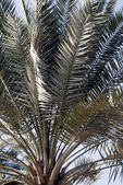 Palm Stems and Leafs — Stock Photo