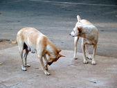 Street Dogs — Stock Photo