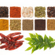 Spices — Stock Photo #1396846