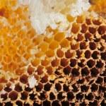 Beehive — Stock Photo #1640723