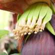 Blossoming banana — Stock Photo