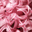 Pink hyacinth flowers — Stock Photo #2203514