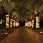 Palm lane in night illumination — Stock Photo