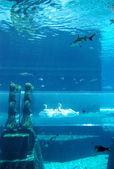 Aquarium van de atlantis de palm hotel — Stockfoto