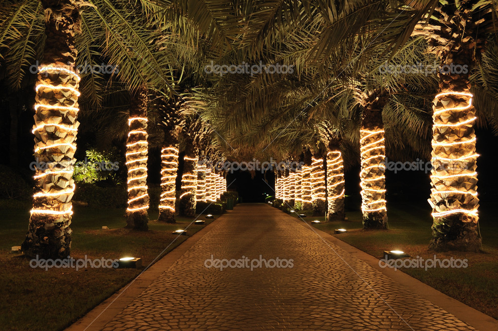 Palm lane in night illumination, Jumeirah, UAE — Stock Photo #1261928