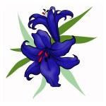 Dark blue lily — Stock Photo