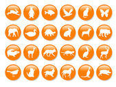 Many orange icons — Stock Photo